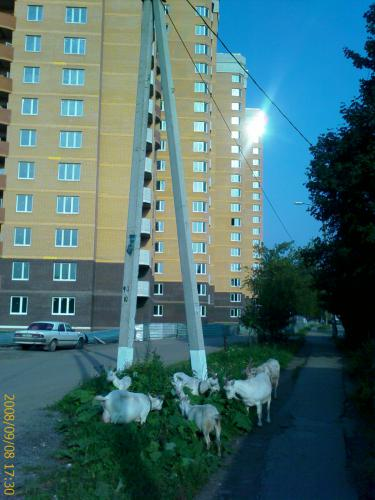 20080908_00646.jpg