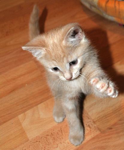 Котик.jpg