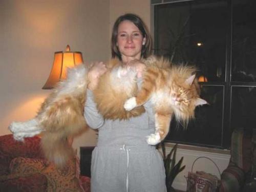 651_cats.jpg