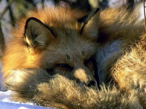fox25.jpg