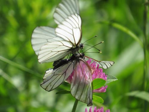 бабочки.JPG